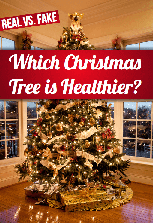 Real Vs. Fake: Which Christmas Tree is Healthier?